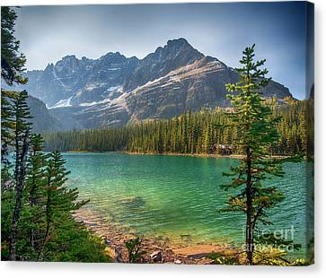 Lake O'hara - Yoho National Park Canvas Print by Yefim Bam