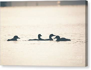 4 Loon Silhouettes Canvas Print by Cheryl Baxter