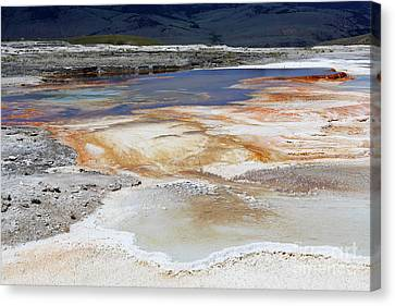 Mammoth Hot Springs Upper Terraces In Yellowstone National Park Canvas Print by Louise Heusinkveld