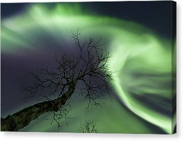 Northern Lights In The Arctic Canvas Print by Arild Heitmann