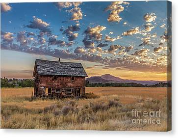 Haybales Canvas Print - Old Homestead  by Robert Bales