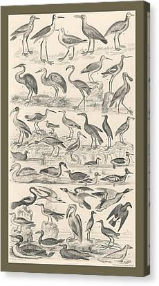 Ornithology Canvas Print by Rob Dreyer