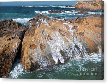 Point Lobos Concretions Canvas Print