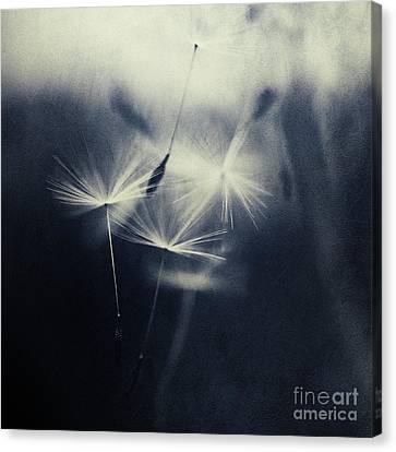 Whispers In The Dark 5 Canvas Print by Priska Wettstein