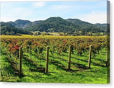 Grapes Canvas Print - Rows Of Grapevines In Napa Valley California by Brandon Bourdages