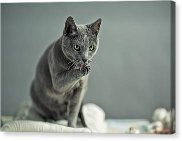 Portraits Of Cats Canvas Print - Russian Blue by Nailia Schwarz