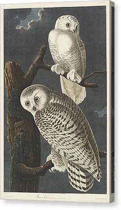 Snowy Owl Canvas Print by Dreyer Wildlife Print Collections
