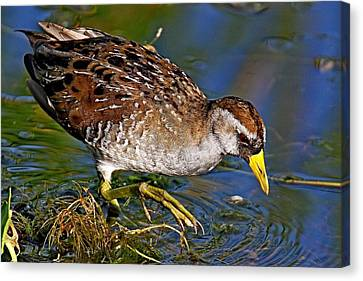 Sora Rail Canvas Print