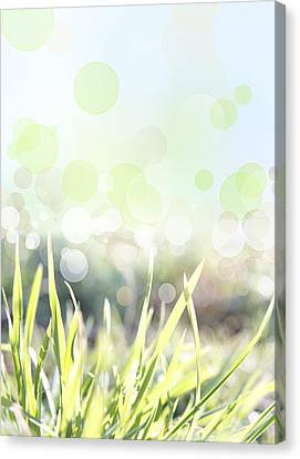 Spring Background Canvas Print by Les Cunliffe