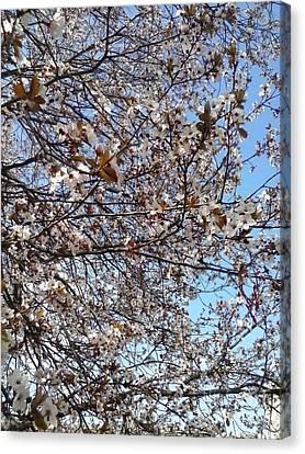 Spring Edition Flowering Tree Canvas Print
