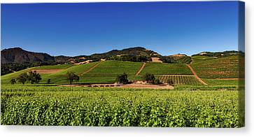 Vineyards Of California Canvas Print by Mountain Dreams