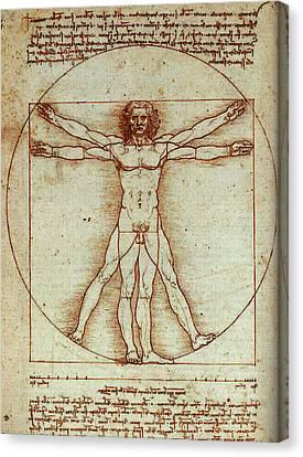 Vitruvian Man Canvas Print by Leonardo In Digital