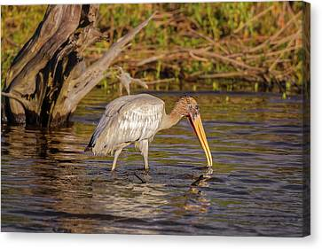 Canvas Print featuring the photograph Wood Stork by Peter Lakomy