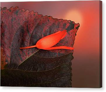 Canvas Print featuring the photograph 4366 by Peter Holme III