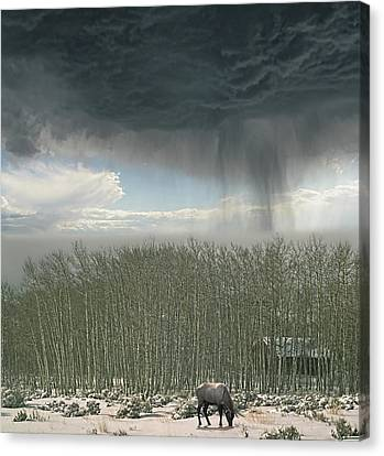 Canvas Print featuring the photograph 4375 by Peter Holme III