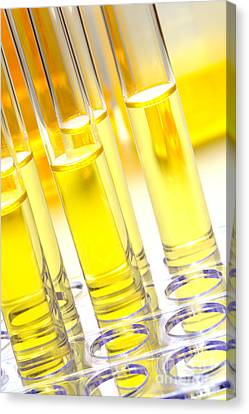 Laboratory Test Tubes In Science Research Lab Canvas Print