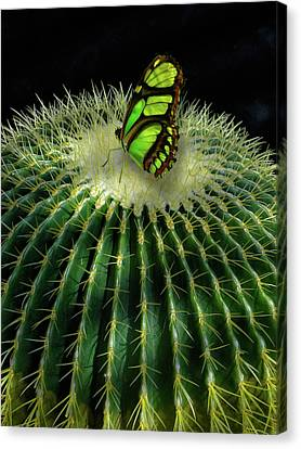 Canvas Print featuring the photograph 4409 by Peter Holme III