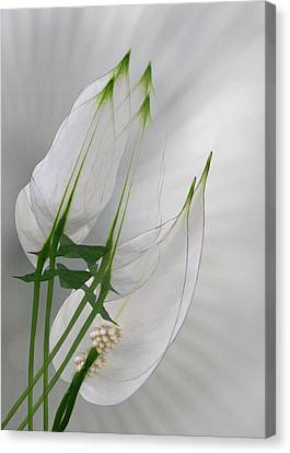 Canvas Print featuring the photograph 4425 by Peter Holme III