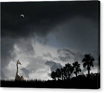 Canvas Print featuring the photograph 4458 by Peter Holme III