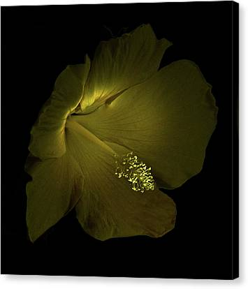 Canvas Print featuring the photograph 4460 by Peter Holme III