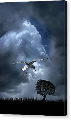 Canvas Print featuring the photograph 4472 by Peter Holme III