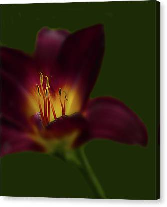 Canvas Print featuring the photograph 4479 by Peter Holme III