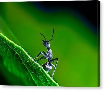 Macro Insects In Colorful Nature Canvas Print by Cliff Ting