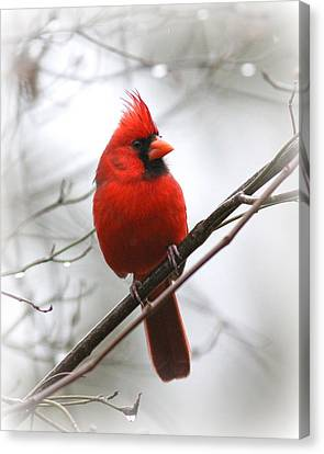 4772-001 - Northern Cardinal Canvas Print