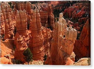 Bryce Canyon National Park Canvas Print
