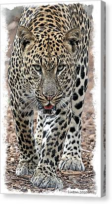 African Leopard Canvas Print