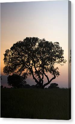 Alentejo Canvas Print by Andre Goncalves