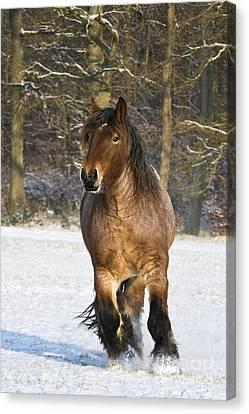 Ardennais Draft Horse Canvas Print by Jean-Louis Klein & Marie-Luce Hubert