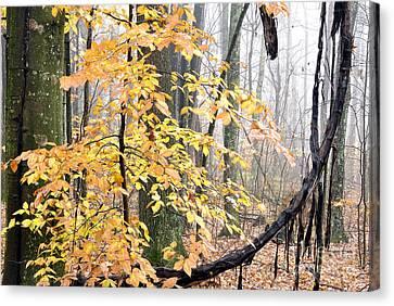 Autumn Monongahela National Forest Canvas Print by Thomas R Fletcher