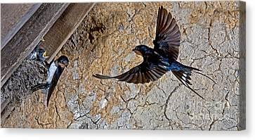 Hirundo Canvas Print - Barn Swallow Hirundo Rustica by Gerard Lacz