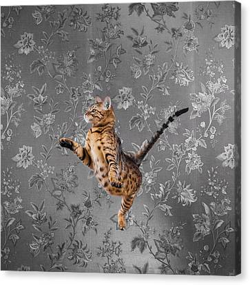Bengal Cat Jumping Canvas Print