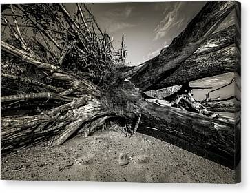Canvas Print featuring the photograph Black Rock Beach by Peter Lakomy