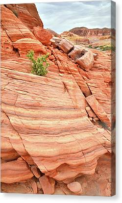 Canvas Print featuring the photograph Colorful Wash In Valley Of Fire by Ray Mathis