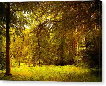 Forest Canvas Print by Svetlana Sewell