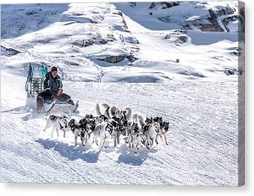 Huskies In Ilulissat, Greenland Canvas Print by Joana Kruse