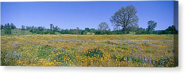 Panoramic View Of Spring Flowers Canvas Print by Panoramic Images