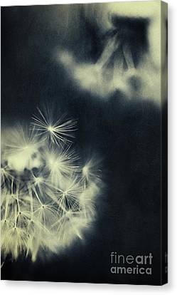 Whispers In The Dark 3 Canvas Print by Priska Wettstein