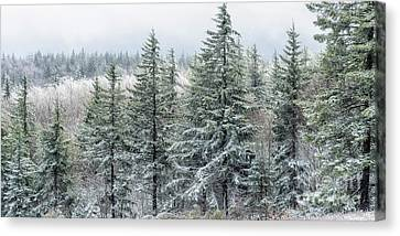 Rhime Ice Highland Scenic Highway Canvas Print