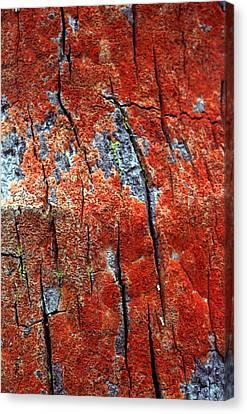Tree Bark Canvas Print
