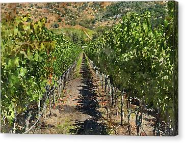 Vineyard In Napa Valley California Canvas Print by Brandon Bourdages