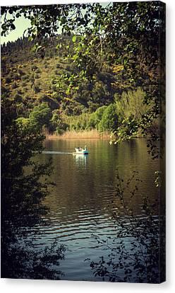 Swans... Canvas Print - Belver Landscape by Carlos Caetano