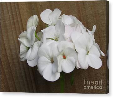 Canvas Print - Flower by Joyce Woodhouse