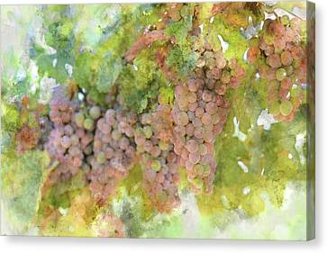 Grapes On The Vine Canvas Print by Brandon Bourdages