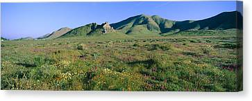 Panoramic View Of Spring Flowers Canvas Print