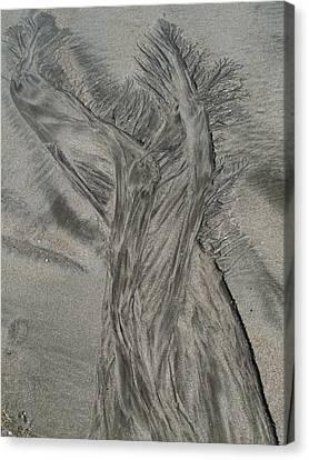 Sand Reels Canvas Print by Joe  Palermo