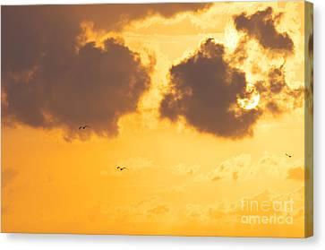 Flying Seagull Canvas Print - Sunset by Angela Doelling AD DESIGN Photo and PhotoArt